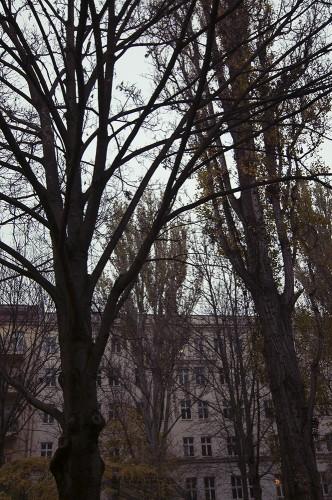 Herbst-Auerpark2