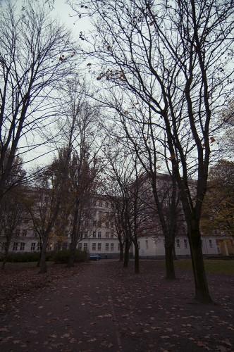 Herbst-Auerpark4
