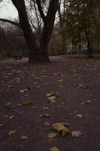 Herbst-Auerpark6