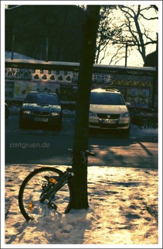 berlin-daisy7