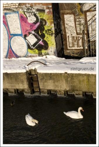 berlin-daisy8